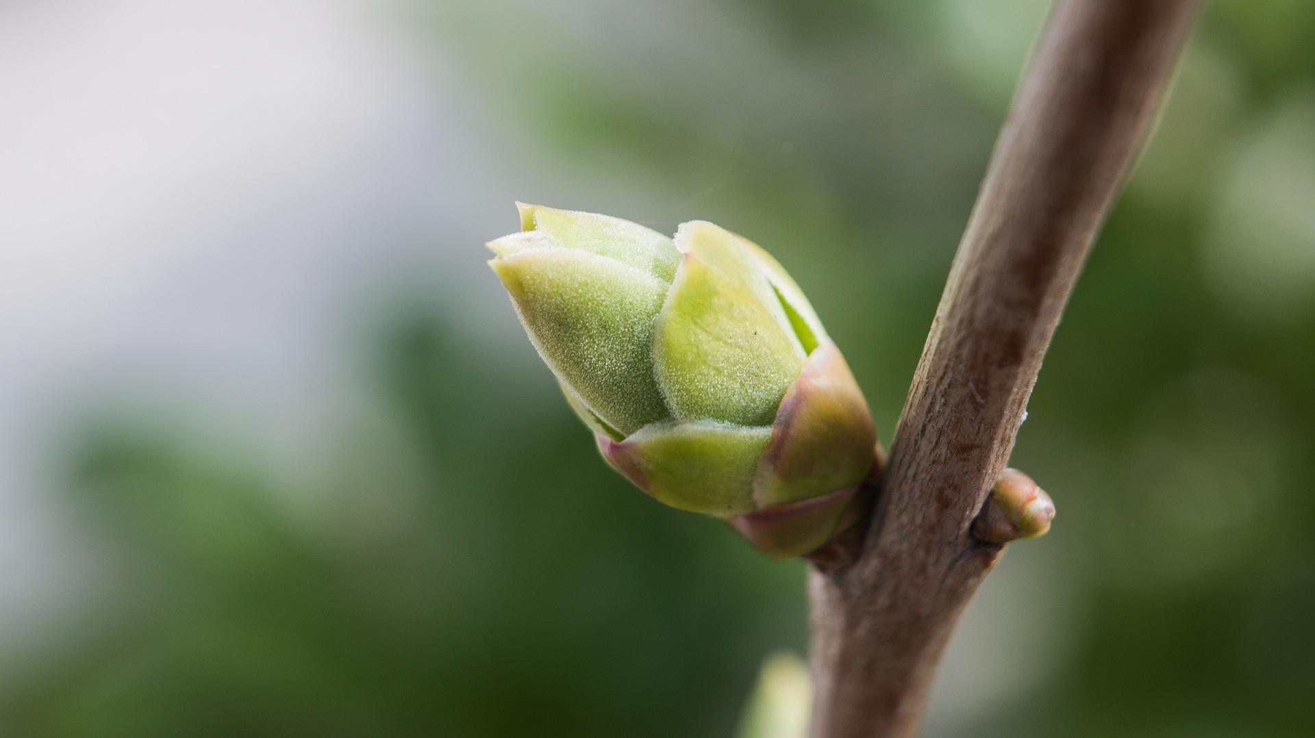 Udvikling - vækst - blomstre